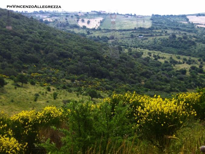 paesaggio_di_ulivi_capo_dacqua