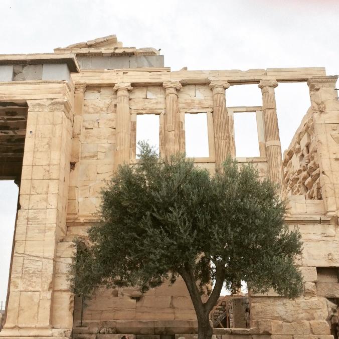 Archeologia_e_olio_di_oliva